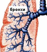 Бронхопневмония – причини и лечение