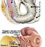 Гломерулонефрит – симптоми и причини