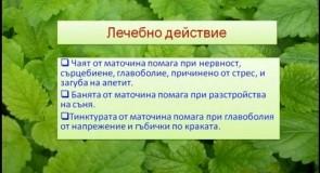 Видео: Маточина (билка) – чай и лечебни свойства