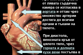 Ниско кръвно – Артериална Хипотония