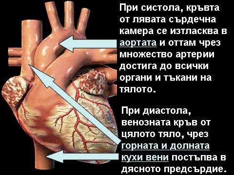 ниско кръвно налягане
