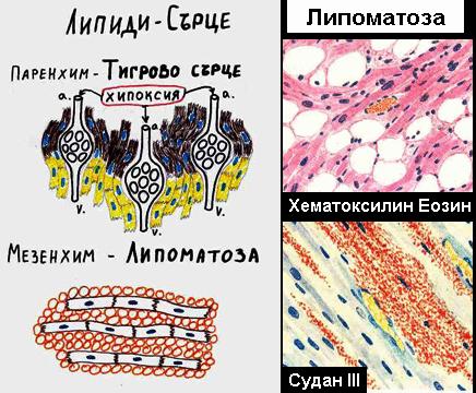 Клетъчни натрупвания 4