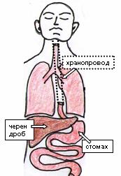 Рак на хранопровода