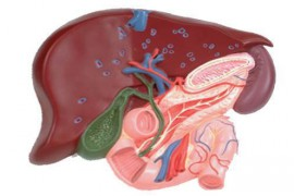 Холецистит – лечение и симптоми