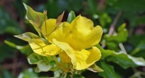 Петте най-силни билки за подсилване на имунната система