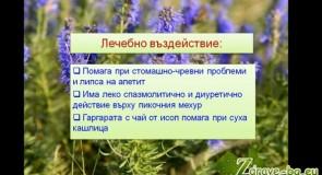 Видео: Исоп (билка) – лечебно действие и чай