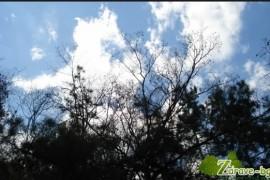 Видео: Прошката – Зоя Чакърова