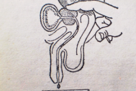 Масаж на простатата